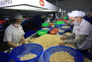 Kim ngạch xuất khẩu hạt điều tăng